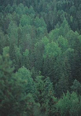 Eiji INA - 北への扉 ヘルシンキ [ Finland ヌークシオ国立公園の森 ] , 2007