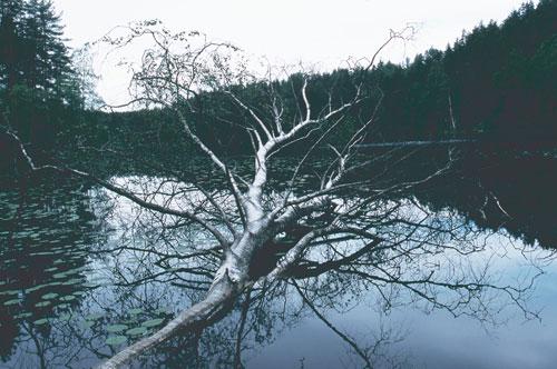 Eiji INA - 北への扉 ヘルシンキ [ Finland ヌークシオ国立公園の湖 ] , 2007