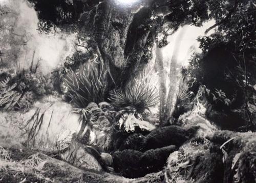 Tamaki SHINDO - Cradle of deep V, 2011, gelatin silver print
