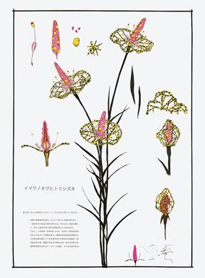 齋藤芽生, 毒花図鑑「イマワノキワヒトリシズカ」, アクリル・紙, 57.5x40.2cm