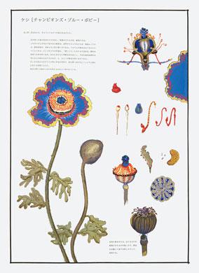 齋藤芽生, 毒花図鑑「チャンピオンズ・ブルー・ポピー」, アクリル・紙, 57.5x40.2cm