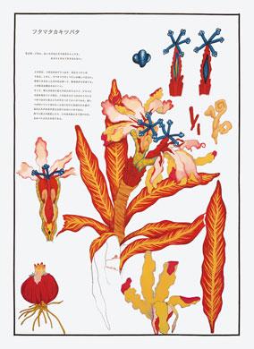 齋藤芽生, 毒花図鑑「フタマタカキツバタ」, アクリル・紙, 57.5x40.2cm