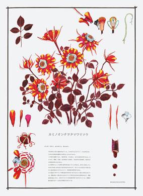 齋藤芽生, 毒花図鑑「カミノオンチヲタマワリソウ」, アクリル・紙, 57.5x40.2cm