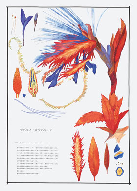 齋藤芽生, 毒花図鑑「サバキノ・カラバリーナ」, 1993, アクリル・紙, 57.5x40.2cm