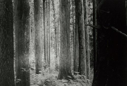 Tamaki SHINDO - Echo and migrate, 2012, gelatin silver print