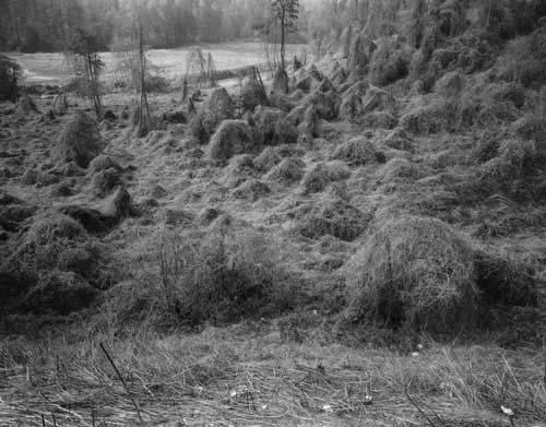 Toshio SHIBATA - #2333 MCA Chicago , Lake James Dam, Burke County, NC , 1997 ,Gelatin silverprint