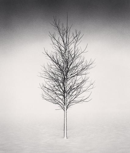 Michael Kenna - Tree Portrait, Study 1, Wokato, Hokkaido, Japan. 2002